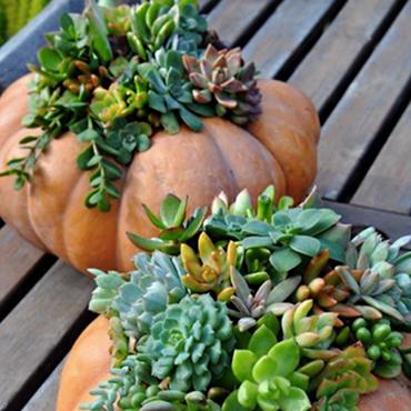 DIY Pumpkin Succulent Centerpieces